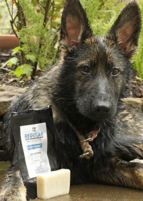 Legendary Canine Brand Ambassador